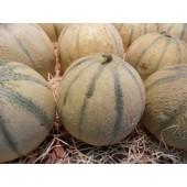 Melon (la pièce  de 800 g environ)