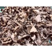 Champignon Trompette de la mort (les 200 g)