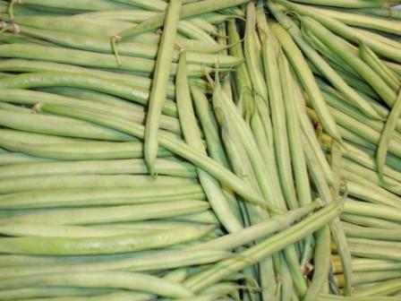 Haricot-vert (les 500 g)