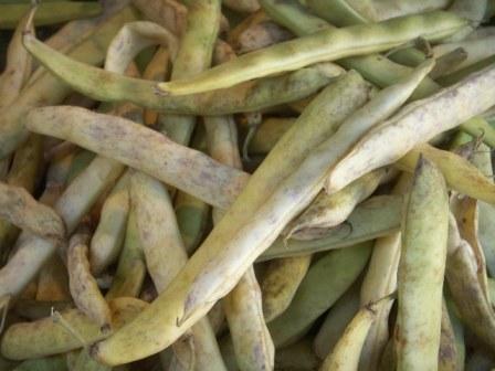 Haricots coco de Paimpol (les 500g)