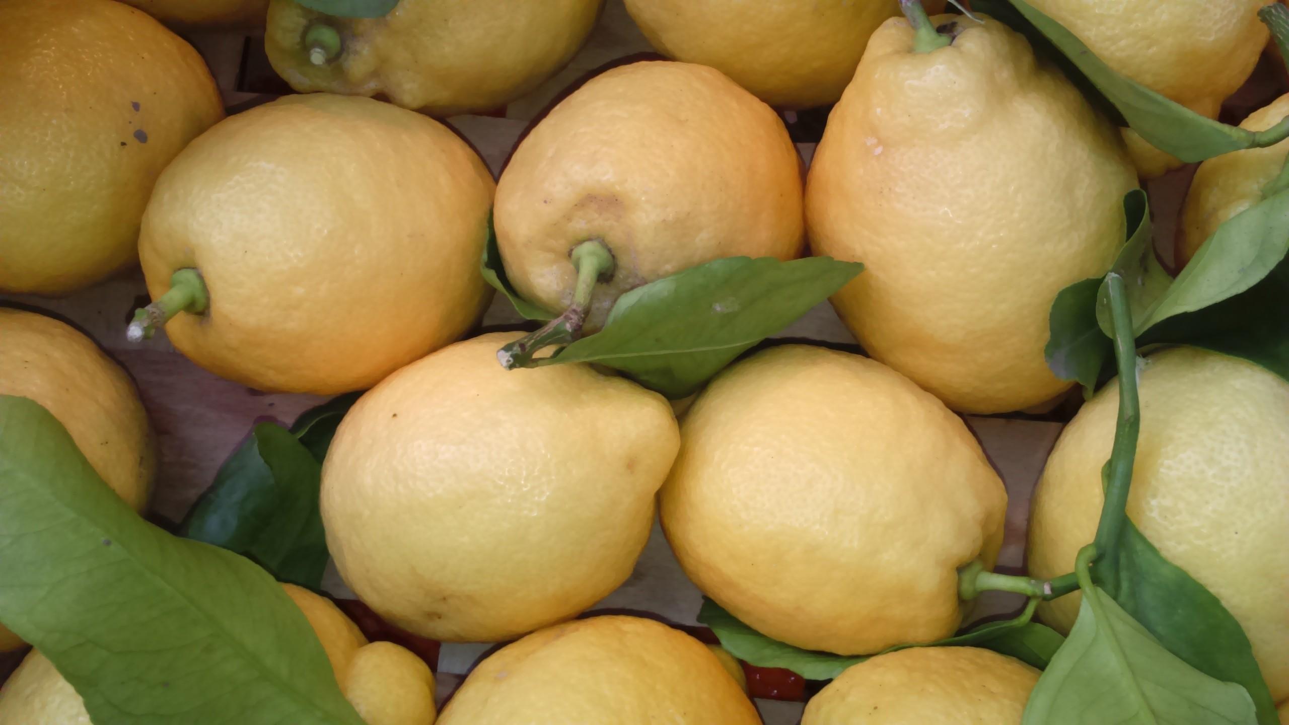 Citron de Nice (la pièce)