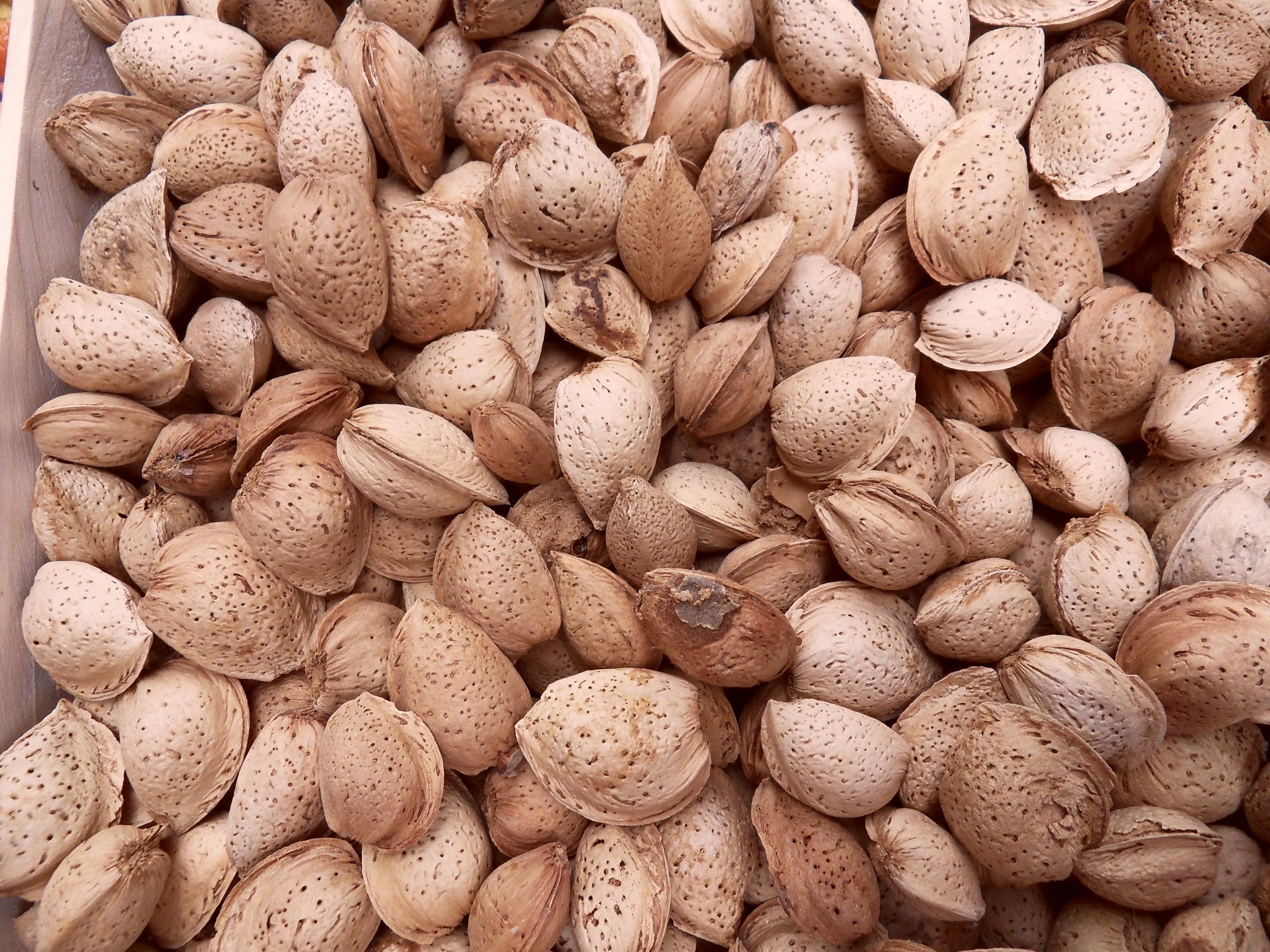 Amande coque(les 250 g)