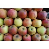 Pomme Reine des Reinettes (la pièce)