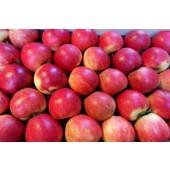 Pomme Delbard  (la pièce)