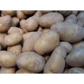 Pomme de terre  'Annabelle' (les 500g)