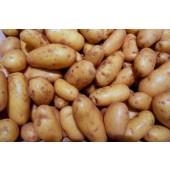 Pomme de terre Pompadour du Touquet (les 500g)