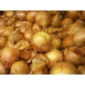 Oignon sec (les 500g)