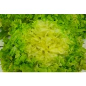 Salade Scarole (la pièce)