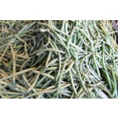 Haricot-vert (les 500g)