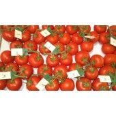 Tomate en grappe  (les 500g)