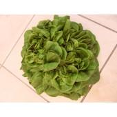 Salade Multifeuille (la pièce)